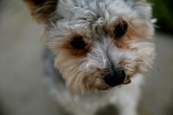 Murphy needs a face trim