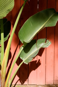Palm leaves against the fence.