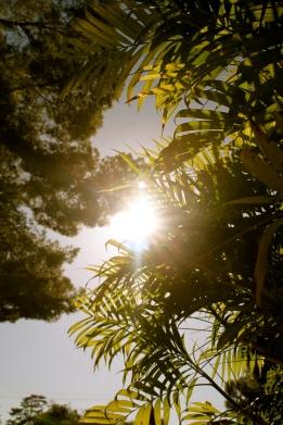 Sunshine between trees.